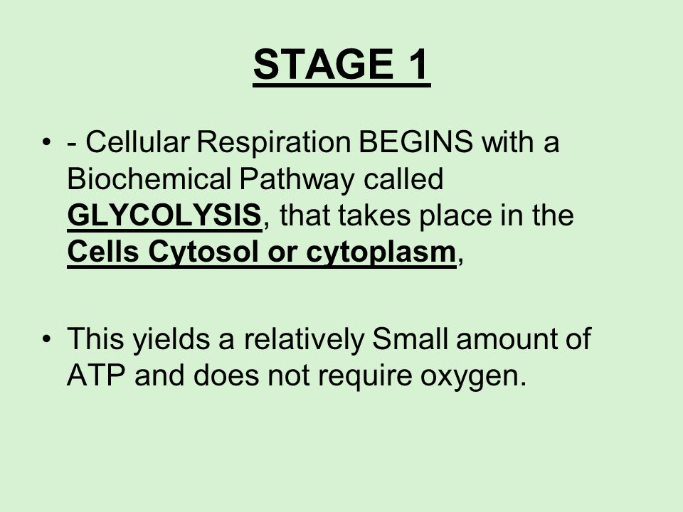 STAGE 1 - Cellular Respiration BEGINS with a Biochemical Pathway called GLYCOLYSIS, that takes place in the Cells Cytosol or cytoplasm, This yields a