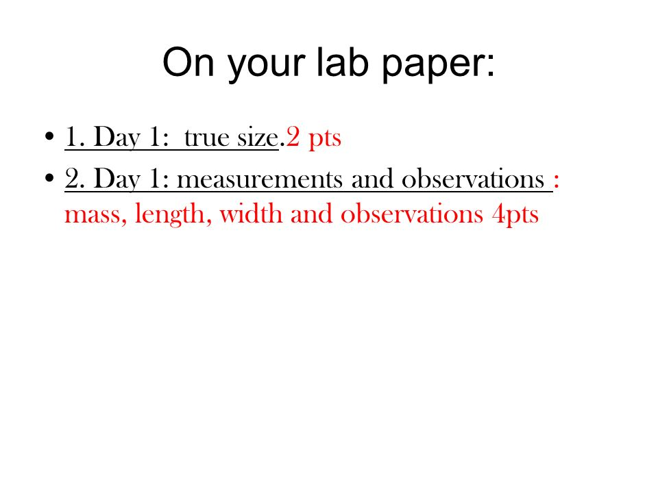 On your lab paper: 1. Day 1: true size.2 pts 2. Day 1: measurements and observations : mass, length, width and observations 4pts