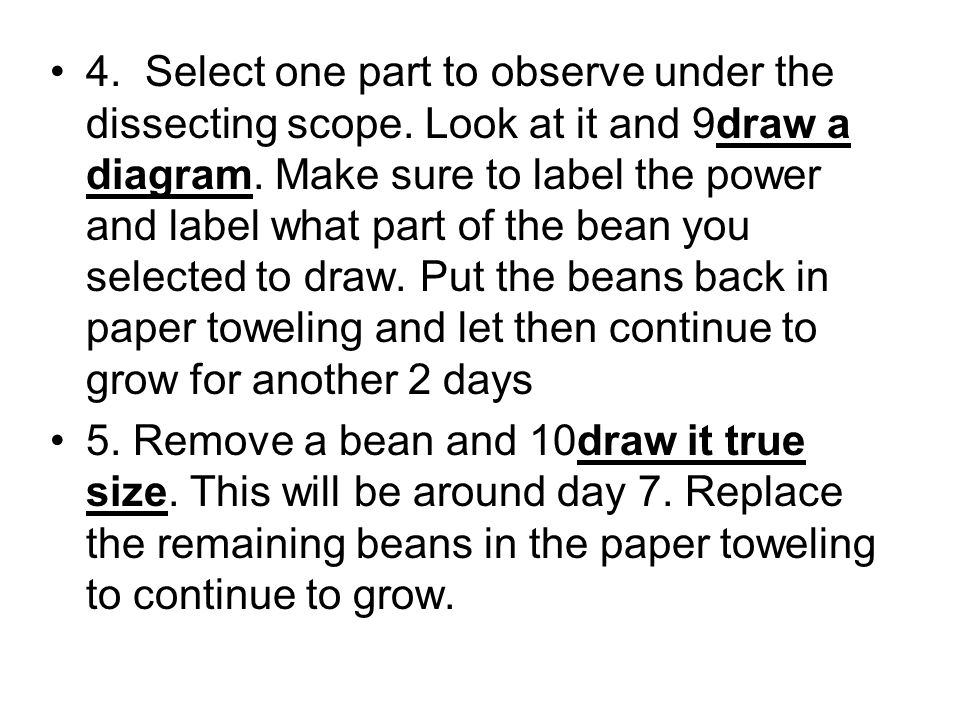 4. Select one part to observe under the dissecting scope. Look at it and 9draw a diagram. Make sure to label the power and label what part of the bean