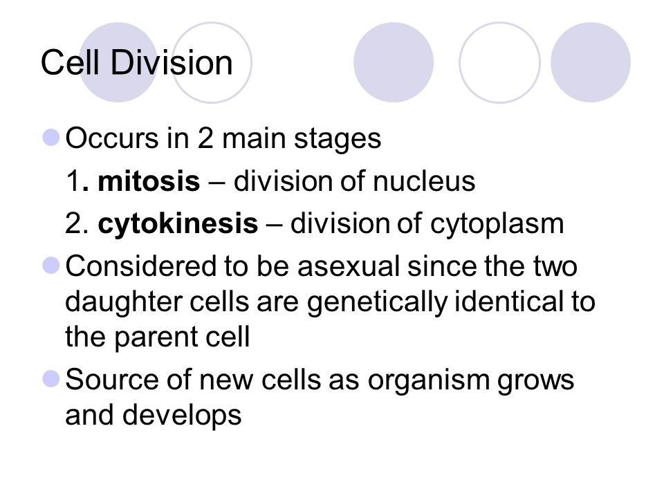 Chromosomes Made of DNA and proteins Cells of every organism have a specific number of chromosomes humans = 46 carrot = 18 fruit fly = 8 Chromosomes are only visible during cell division, these structures form to compact the DNA to make it easy to divide