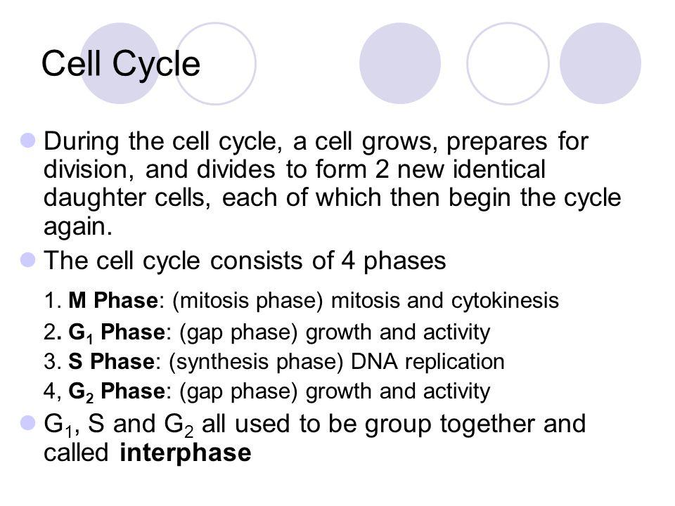 Centrioles Chromatin Interphase Nuclear envelope Cytokinesis Nuclear envelope reforming Telophase Anaphase Individual chromosomes Metaphase Centriole Spindle Centriole Chromosomes (paired chromatids) Prophase Centromere Spindle forming Anaphase