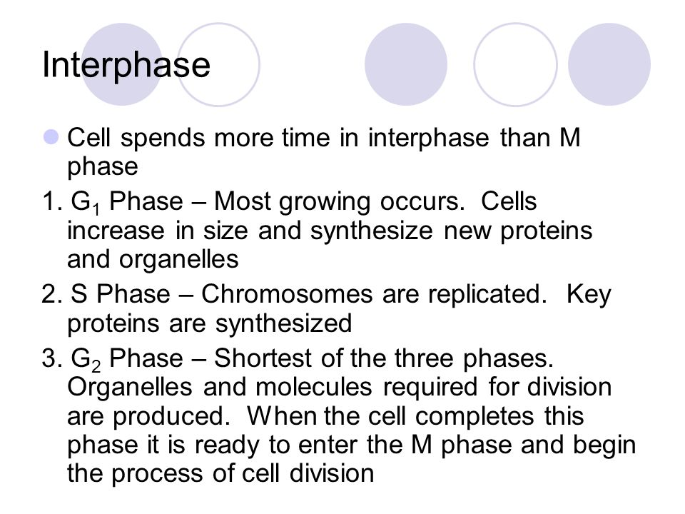 Mitosis Involves the centrioles (cell organelles made of proteins and microtubules) of the cell Occurs in four stages 1.