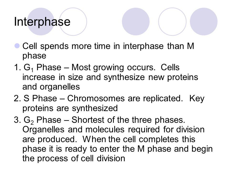 Centrioles Chromatin Interphase Nuclear envelope Cytokinesis Nuclear envelope reforming Telophase Anaphase Individual chromosomes Metaphase Centriole Spindle Centriole Chromosomes (paired chromatids) Prophase Centromere Spindle forming Telophase