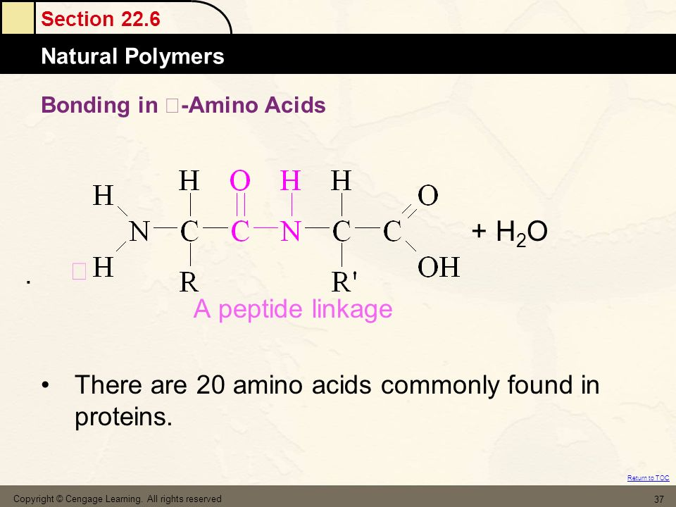 Section 22.6 Natural Polymers Return to TOC Copyright © Cengage Learning. All rights reserved 37 Bonding in -Amino Acids + H 2 O A peptide linkage The