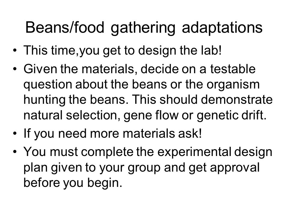 Beans/food gathering adaptations This time,you get to design the lab! Given the materials, decide on a testable question about the beans or the organi