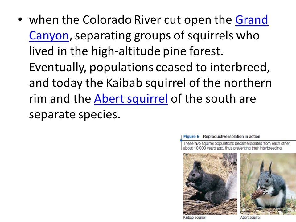 when the Colorado River cut open the Grand Canyon, separating groups of squirrels who lived in the high-altitude pine forest. Eventually, populations