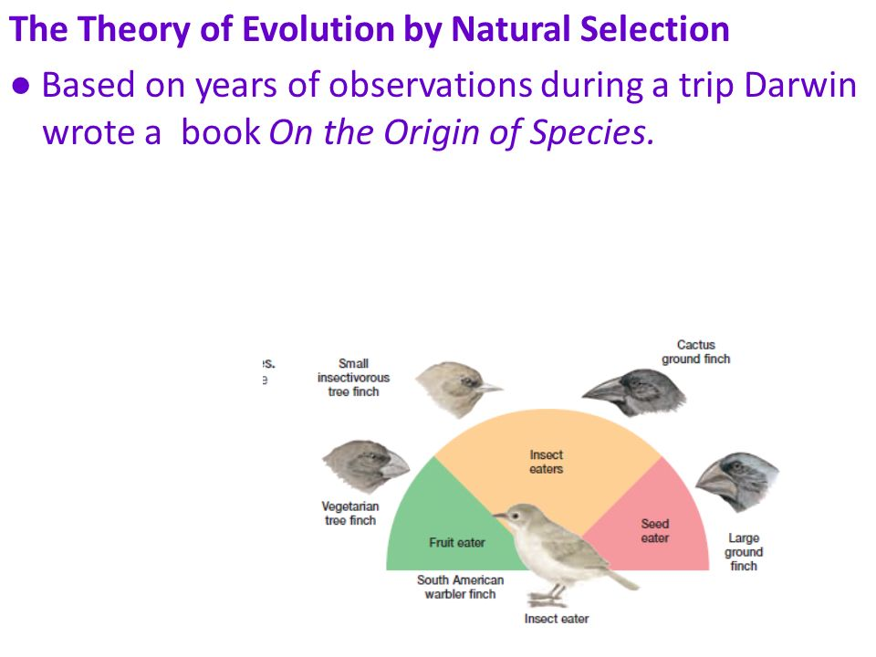 The Theory of Evolution by Natural Selection Based on years of observations during a trip Darwin wrote a book On the Origin of Species.