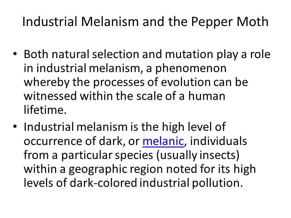 Industrial Melanism and the Pepper Moth Both natural selection and mutation play a role in industrial melanism, a phenomenon whereby the processes of