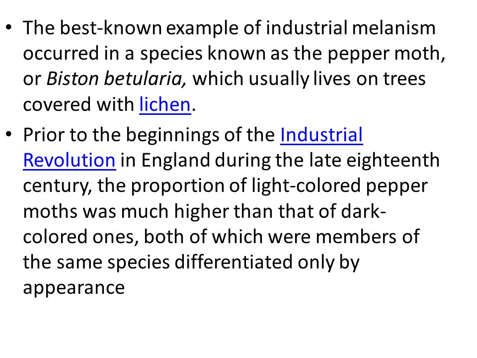 The best-known example of industrial melanism occurred in a species known as the pepper moth, or Biston betularia, which usually lives on trees covere