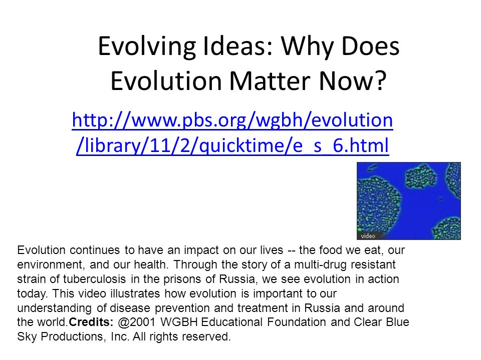 Your assignment: In this Evolution WebQuest you will investigate a variety of types of evidence for evolution.
