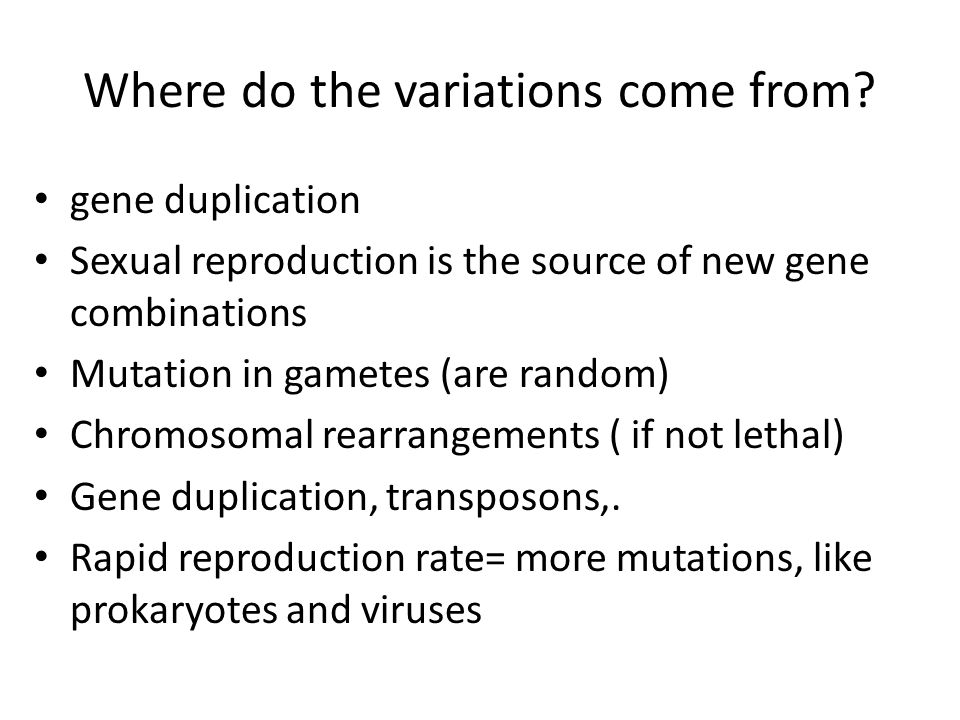 Where do the variations come from? gene duplication Sexual reproduction is the source of new gene combinations Mutation in gametes (are random) Chromo