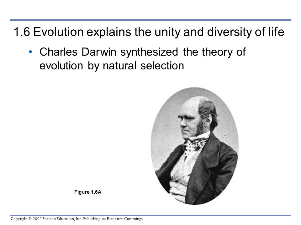 Copyright © 2005 Pearson Education, Inc. Publishing as Benjamin Cummings 1.6 Evolution explains the unity and diversity of life Charles Dar win synthe