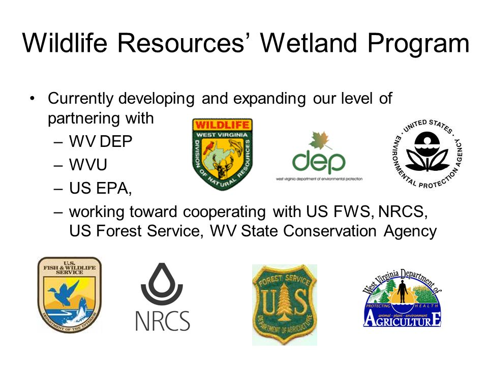 Wildlife Resources Wetland Program Currently developing and expanding our level of partnering with –WV DEP –WVU –US EPA, –working toward cooperating with US FWS, NRCS, US Forest Service, WV State Conservation Agency