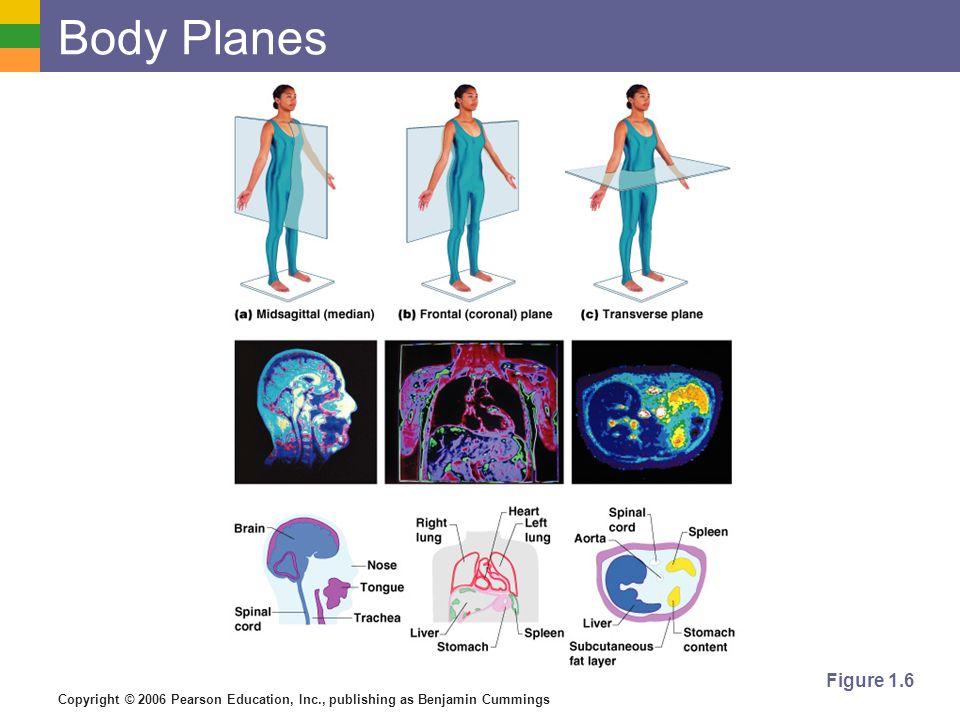 Copyright © 2006 Pearson Education, Inc., publishing as Benjamin Cummings Body Planes Figure 1.6