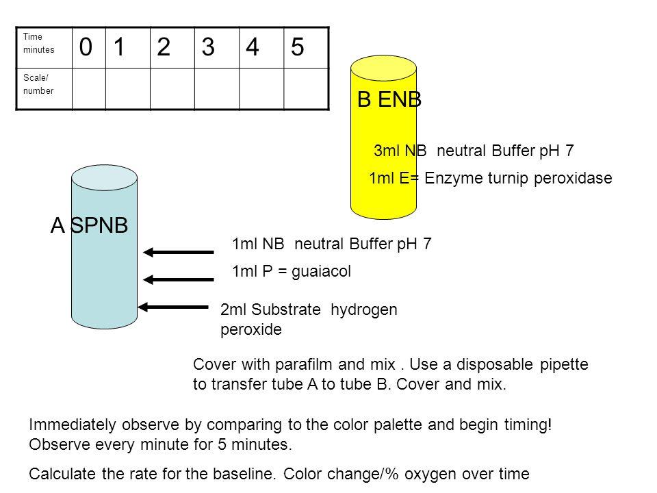 A SPNB 2ml Substrate hydrogen peroxide 1ml P = guaiacol 1ml NB neutral Buffer pH 7 B ENB 3ml NB neutral Buffer pH 7 1ml E= Enzyme turnip peroxidase Co