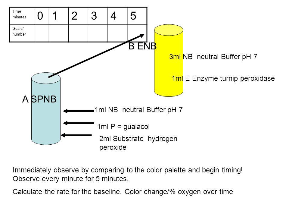 A SPNB 2ml Substrate hydrogen peroxide 1ml P = guaiacol 1ml NB neutral Buffer pH 7 B ENB 3ml NB neutral Buffer pH 7 1ml E Enzyme turnip peroxidase Tim