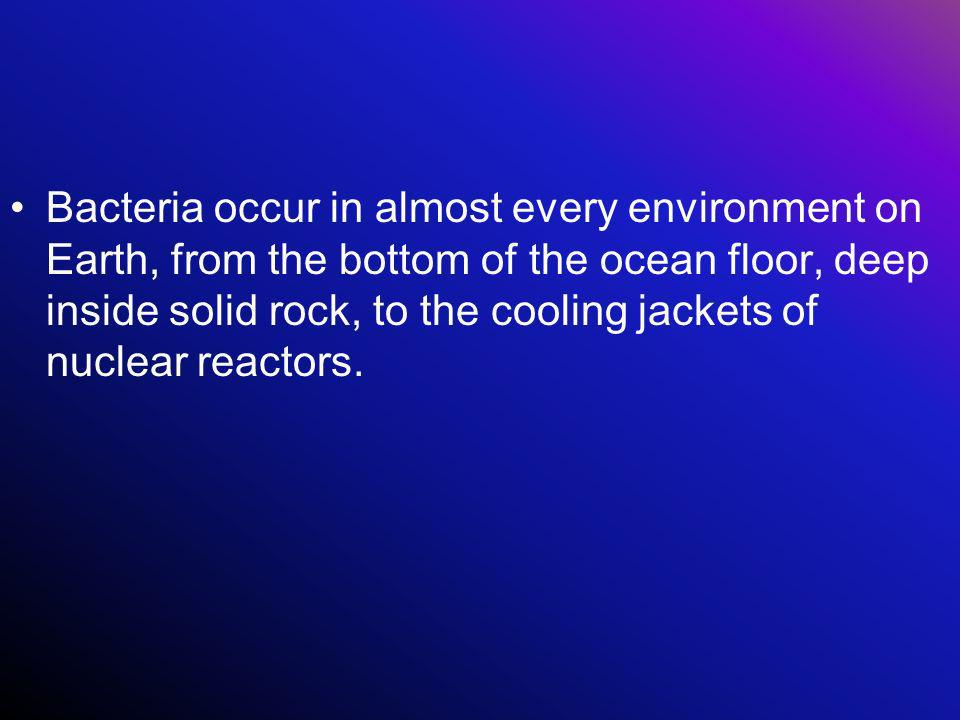 Bacteria occur in almost every environment on Earth, from the bottom of the ocean floor, deep inside solid rock, to the cooling jackets of nuclear rea