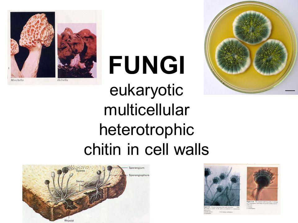 FUNGI eukaryotic multicellular heterotrophic chitin in cell walls