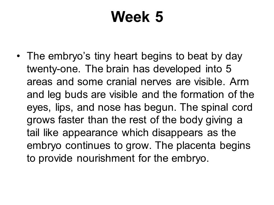 Week 5 The embryos tiny heart begins to beat by day twenty-one. The brain has developed into 5 areas and some cranial nerves are visible. Arm and leg