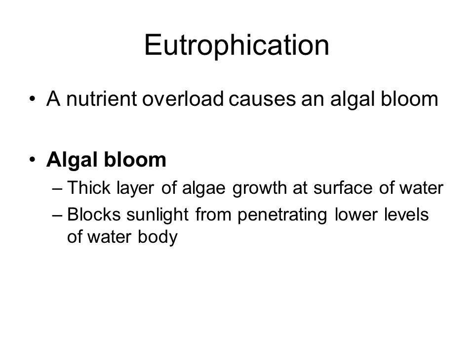 Eutrophication A nutrient overload causes an algal bloom Algal bloom –Thick layer of algae growth at surface of water –Blocks sunlight from penetratin