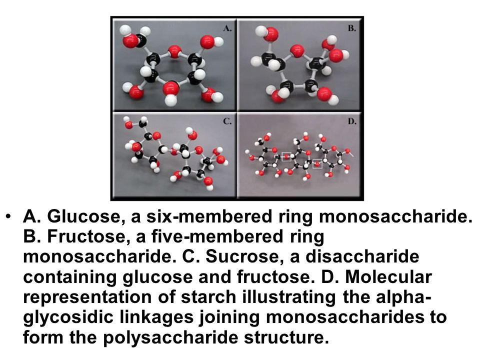A. Glucose, a six-membered ring monosaccharide. B. Fructose, a five-membered ring monosaccharide. C. Sucrose, a disaccharide containing glucose and fr