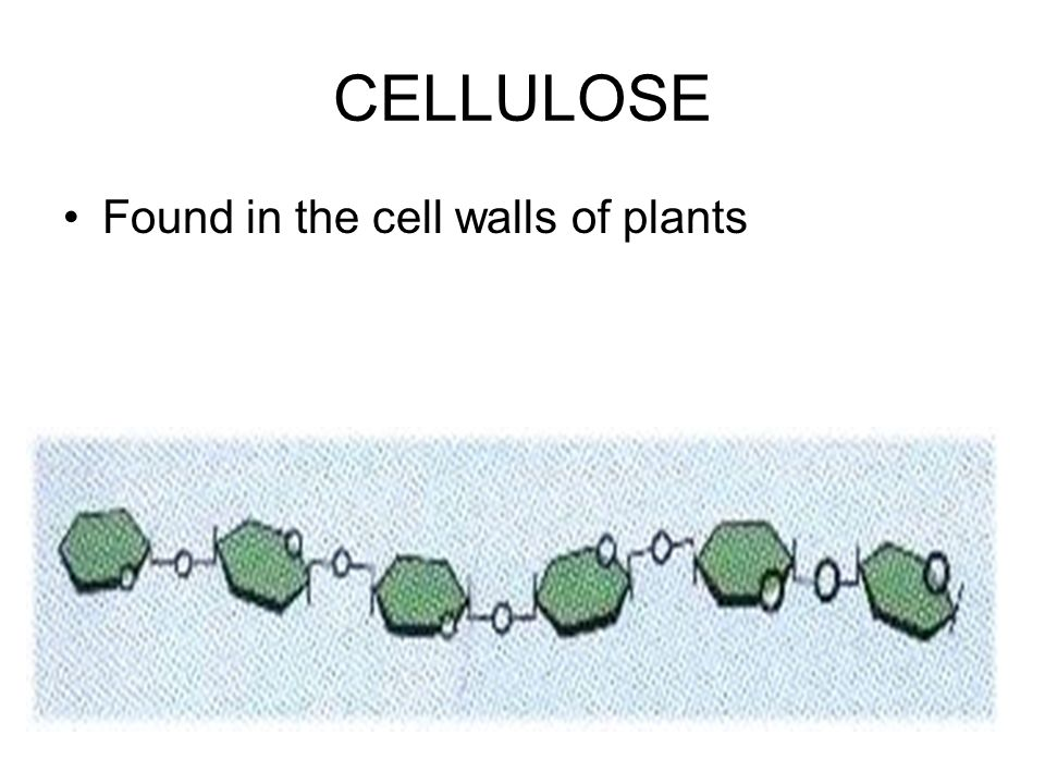CELLULOSE Found in the cell walls of plants