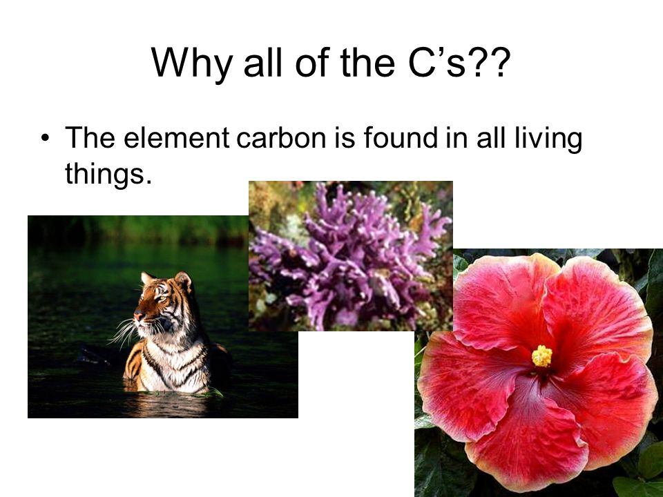 organic chemistry 166 The branch of Chemistry devoted to the study of organic compounds, those containing carbon.