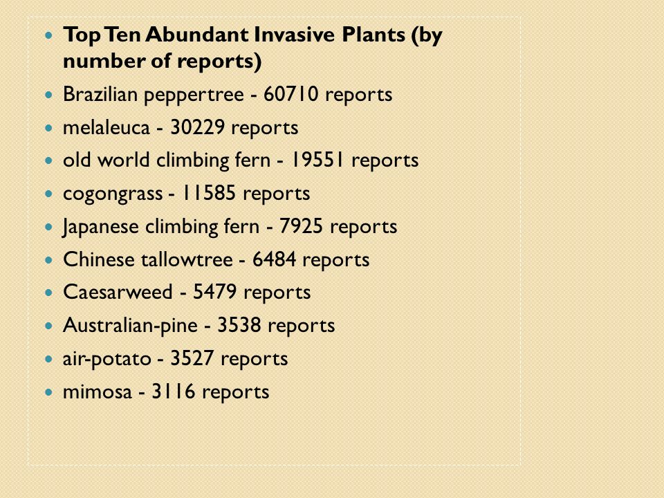 Top Ten Abundant Invasive Plants (by number of reports) Brazilian peppertree - 60710 reports melaleuca - 30229 reports old world climbing fern - 19551