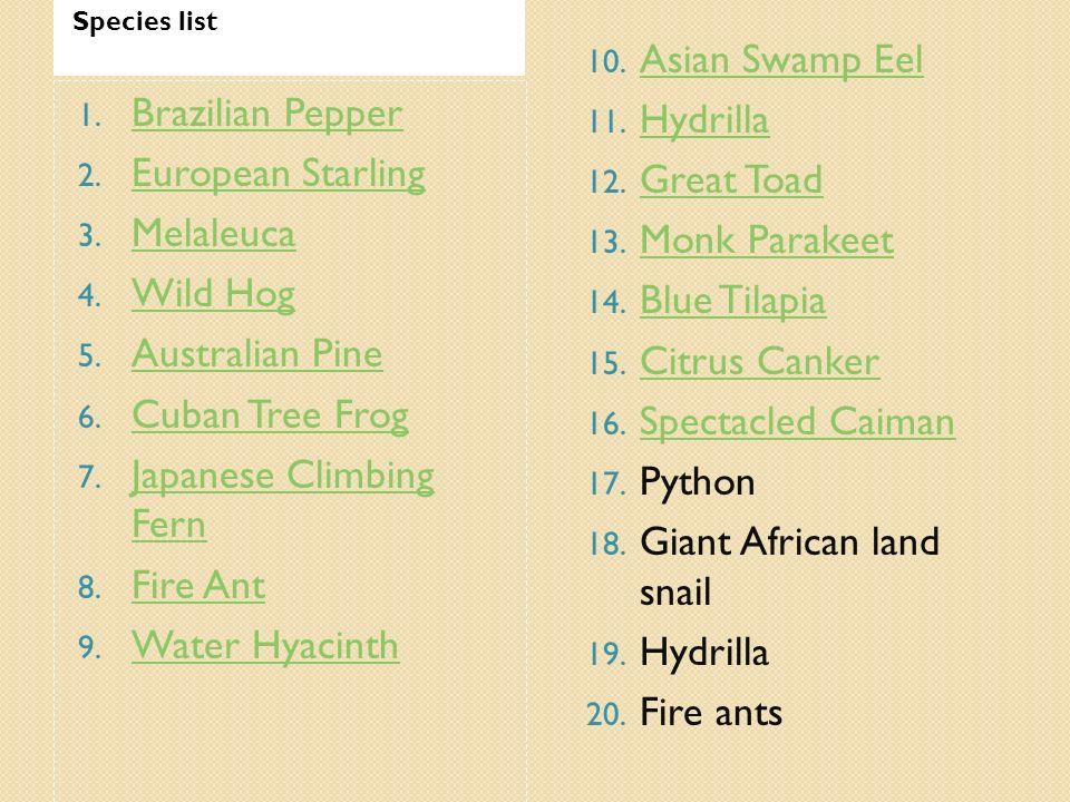 Species list 1. Brazilian Pepper Brazilian Pepper 2. European Starling European Starling 3. Melaleuca Melaleuca 4. Wild Hog Wild Hog 5. Australian Pin