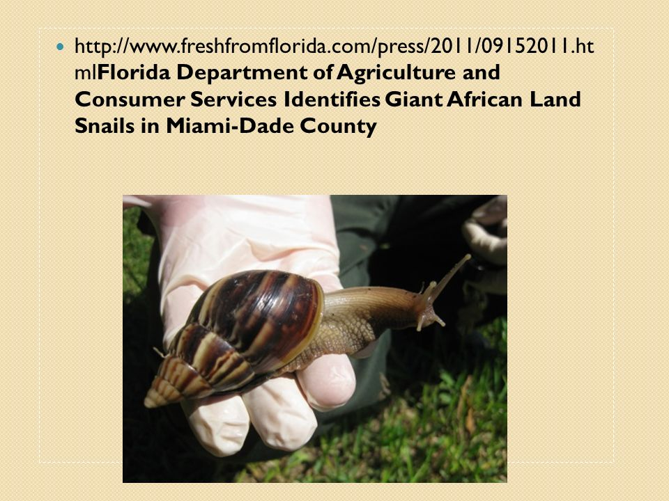 http://www.freshfromflorida.com/press/2011/09152011.ht mlFlorida Department of Agriculture and Consumer Services Identifies Giant African Land Snails
