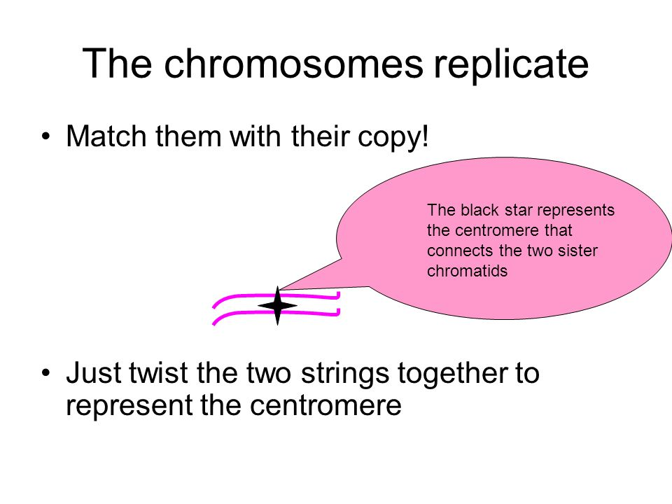 The chromosomes replicate Match them with their copy! Just twist the two strings together to represent the centromere The black star represents the ce