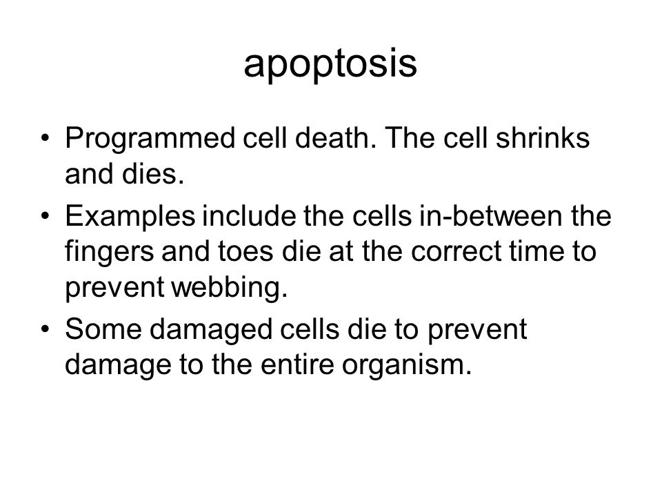 apoptosis Programmed cell death. The cell shrinks and dies. Examples include the cells in-between the fingers and toes die at the correct time to prev