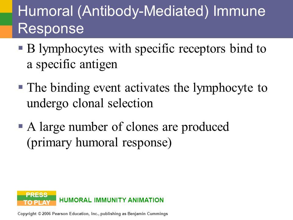 Copyright © 2006 Pearson Education, Inc., publishing as Benjamin Cummings Humoral (Antibody-Mediated) Immune Response B lymphocytes with specific rece