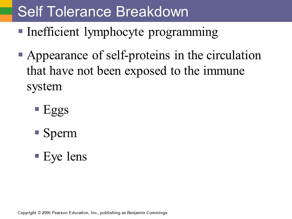 Copyright © 2006 Pearson Education, Inc., publishing as Benjamin Cummings Self Tolerance Breakdown Inefficient lymphocyte programming Appearance of se