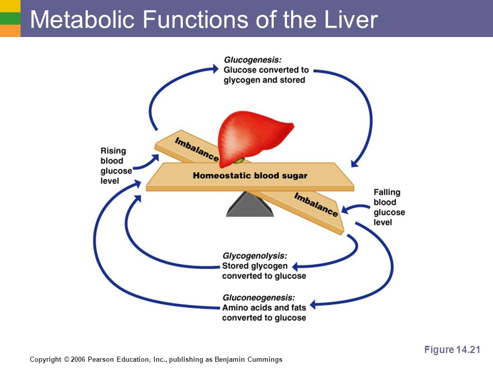 Copyright © 2006 Pearson Education, Inc., publishing as Benjamin Cummings Metabolic Functions of the Liver Figure 14.21