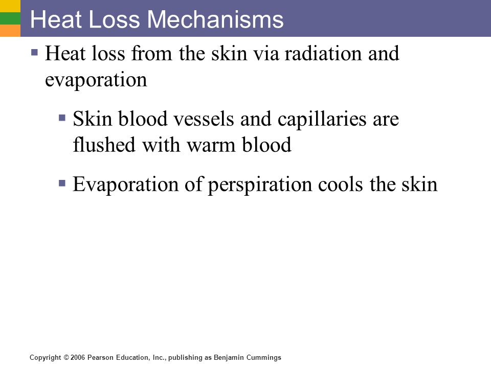 Copyright © 2006 Pearson Education, Inc., publishing as Benjamin Cummings Heat Loss Mechanisms Heat loss from the skin via radiation and evaporation S
