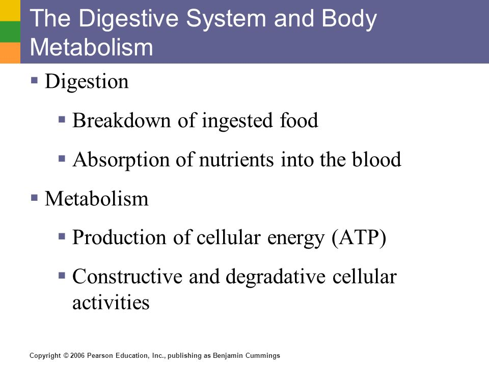 Copyright © 2006 Pearson Education, Inc., publishing as Benjamin Cummings The Digestive System and Body Metabolism Digestion Breakdown of ingested foo