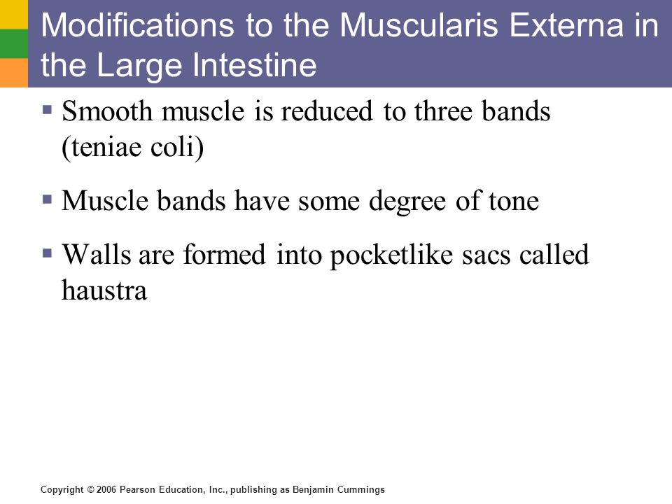 Copyright © 2006 Pearson Education, Inc., publishing as Benjamin Cummings Modifications to the Muscularis Externa in the Large Intestine Smooth muscle