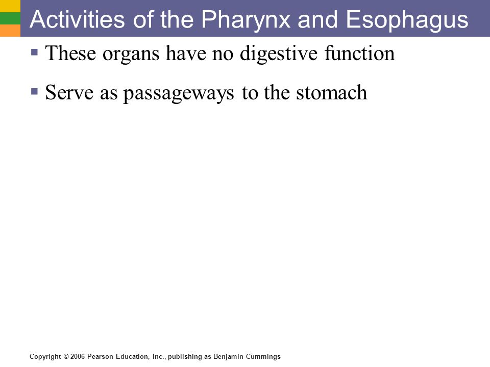 Copyright © 2006 Pearson Education, Inc., publishing as Benjamin Cummings Activities of the Pharynx and Esophagus These organs have no digestive funct