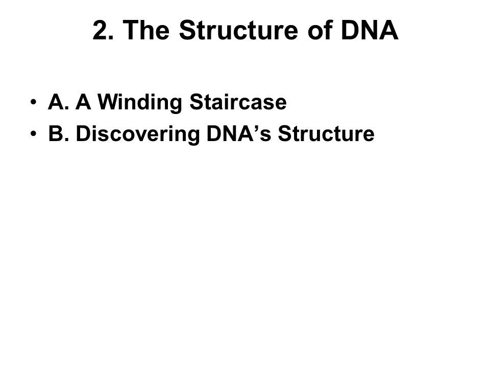 2. The Structure of DNA A. A Winding Staircase B. Discovering DNAs Structure