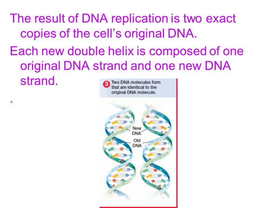 The result of DNA replication is two exact copies of the cells original DNA. Each new double helix is composed of one original DNA strand and one new