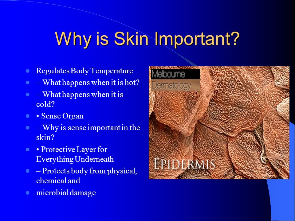Functions cont. Blood reservoir- blood will be moved from skin to muscles during strenuous activity. Excretion- Sweating is an important outlet for wa