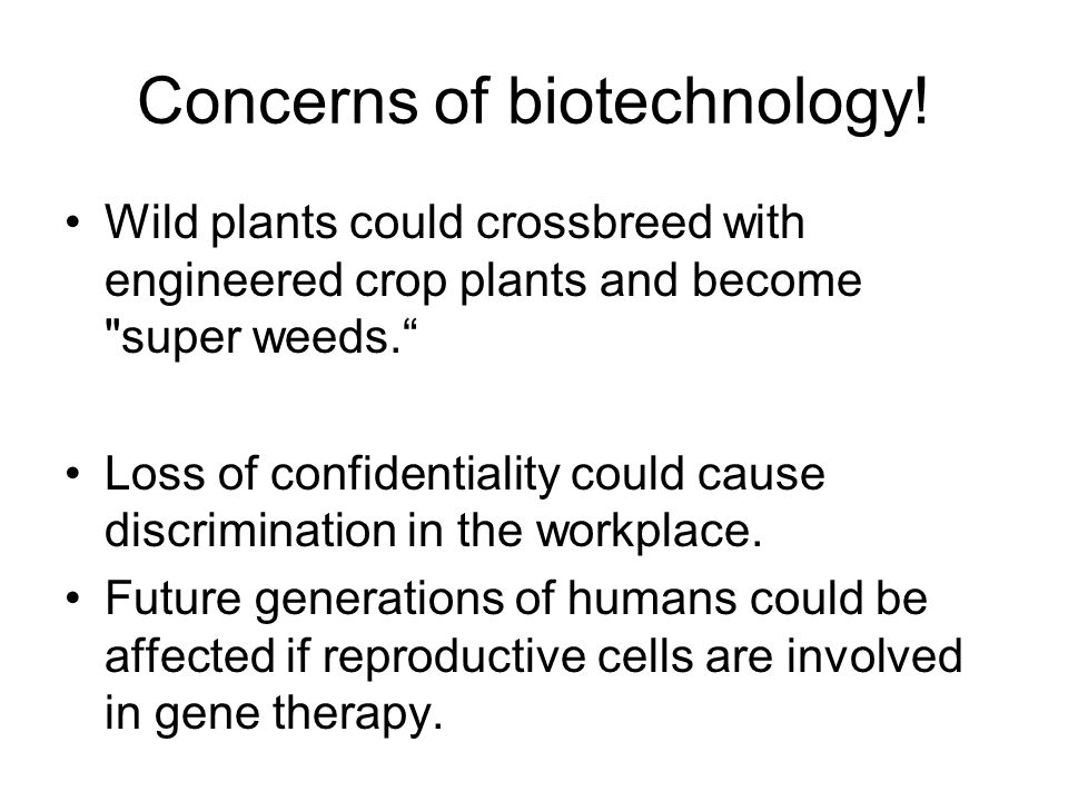 Concerns of biotechnology! Wild plants could crossbreed with engineered crop plants and become