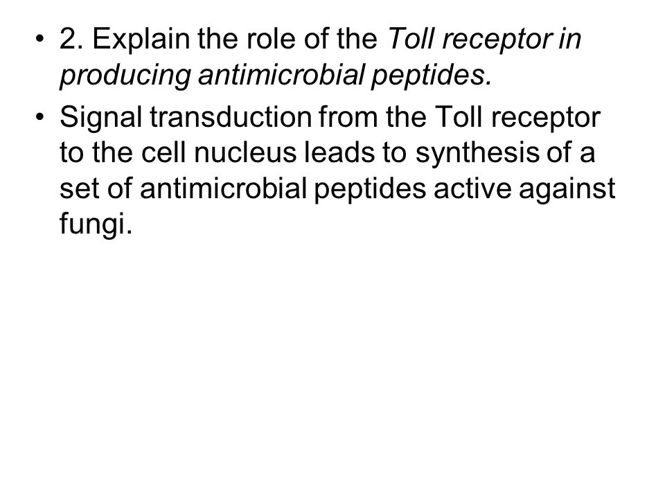 2. Explain the role of the Toll receptor in producing antimicrobial peptides. Signal transduction from the Toll receptor to the cell nucleus leads to