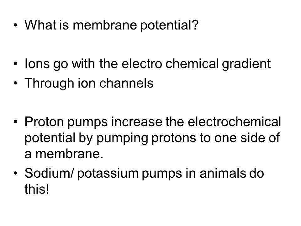 What is membrane potential? Ions go with the electro chemical gradient Through ion channels Proton pumps increase the electrochemical potential by pum