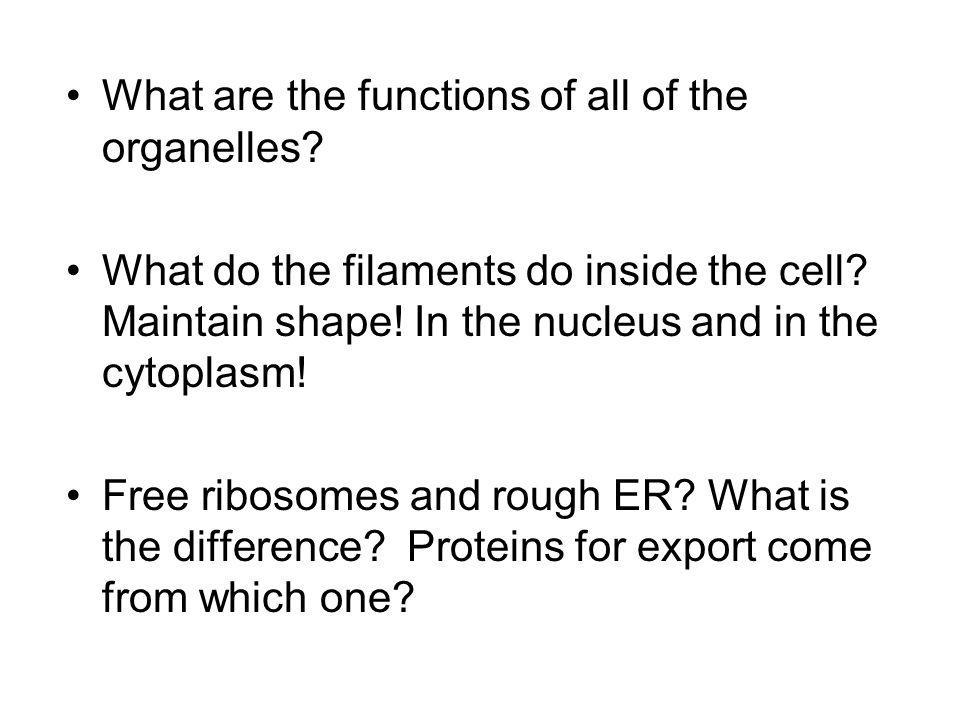 What are the functions of all of the organelles? What do the filaments do inside the cell? Maintain shape! In the nucleus and in the cytoplasm! Free r