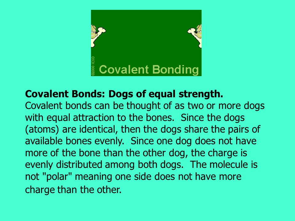 Covalent Bonds: Dogs of equal strength. Covalent bonds can be thought of as two or more dogs with equal attraction to the bones. Since the dogs (atoms