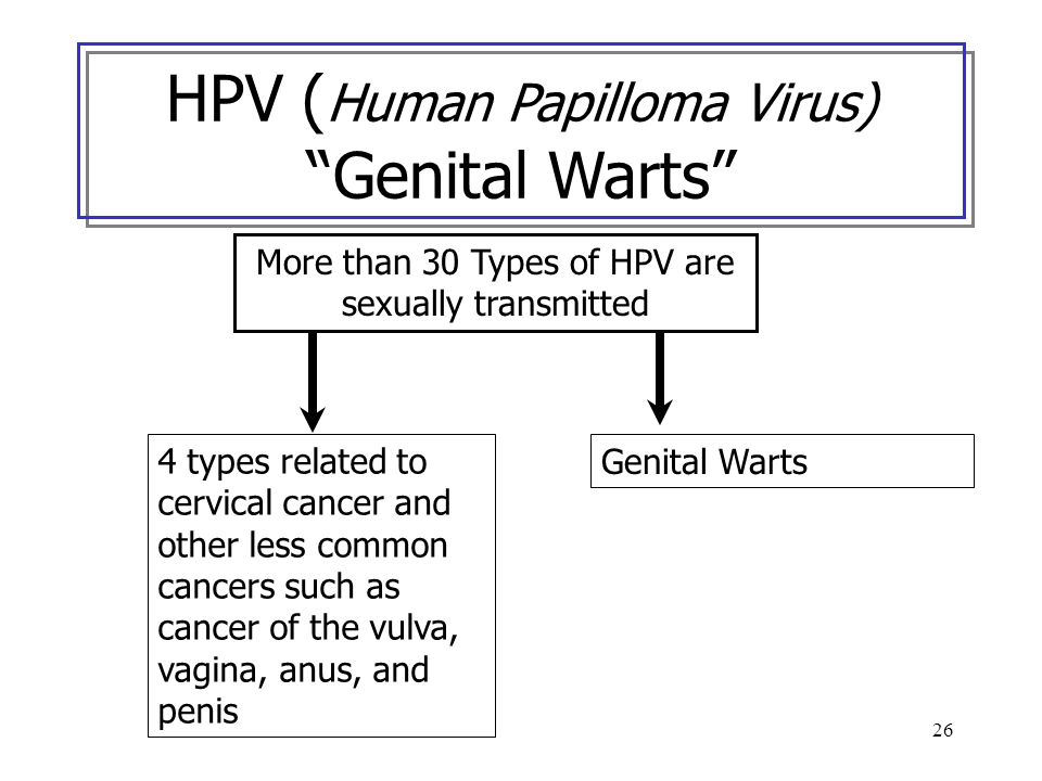 26 More than 30 Types of HPV are sexually transmitted 4 types related to cervical cancer and other less common cancers such as cancer of the vulva, va