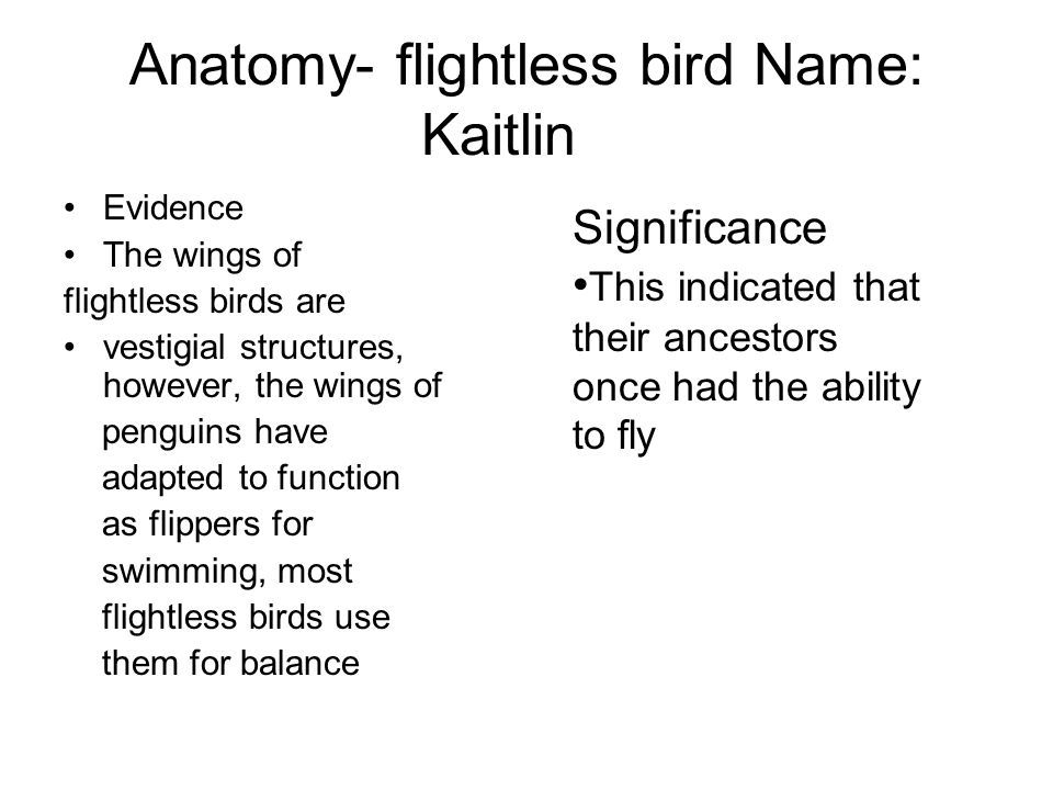 Anatomy- flightless bird Name: Kaitlin Evidence The wings of flightless birds are vestigial structures, however, the wings of penguins have adapted to