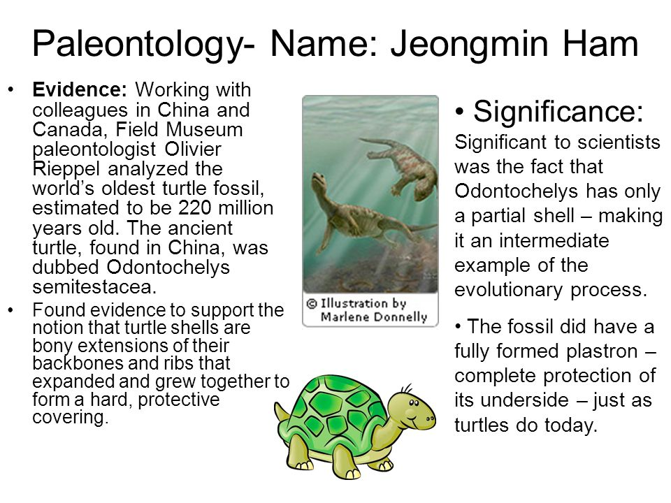 Paleontology- Name: Jeongmin Ham Evidence: Working with colleagues in China and Canada, Field Museum paleontologist Olivier Rieppel analyzed the world